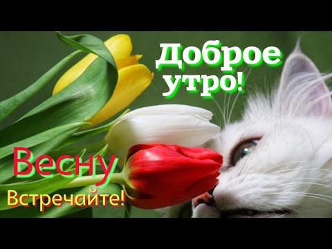 Доброе утро! Скоро весна!Весеннего вам настроения!Встречайте  весну.Музыкальная открытка .