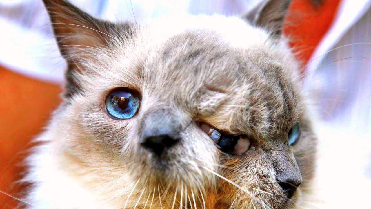 Коты необычных цветов