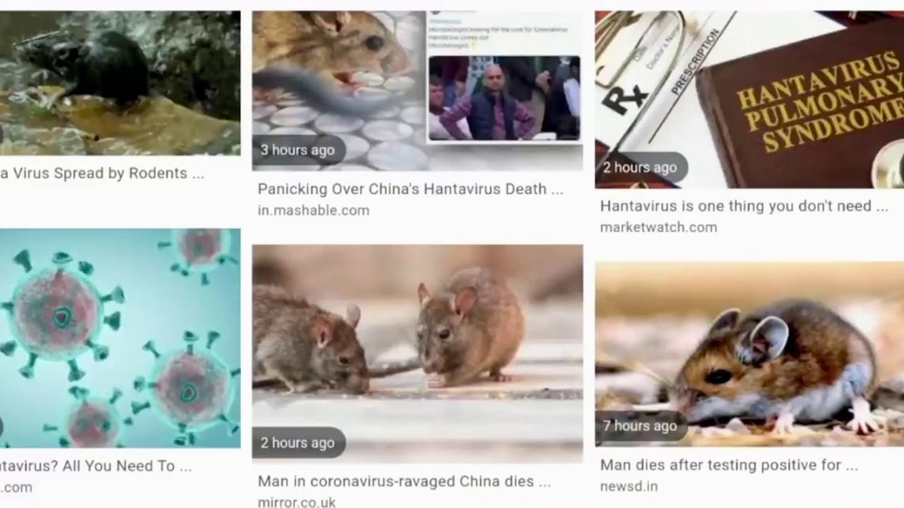 WHAT IS HANTAVIRUS IN HINDI #hantavirus #whatis #china - YouTube