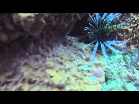 Diving the Palm Beach: The Breakers Reef