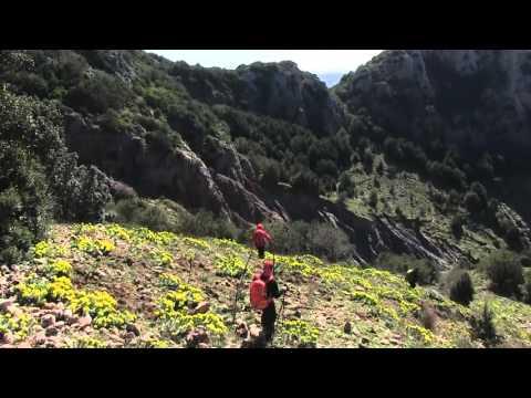 Timpa Perciata e Monte Mammicomito (Serre, Placanica, Calabria), con Francesco Bevilacqua.