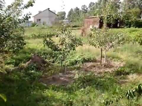 Сорта груш ранних, средних и поздних. Краткое описание, плодоношение в питомнике плодовых.