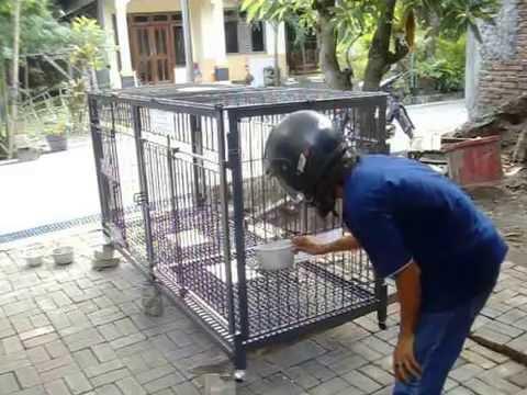 28+ Contoh kandang anjing dari besi terbaru