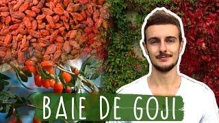 BAIE DE GOJI : Pourquoi vous devriez en manger tous les jours(___ Les baies de Goji, c'est génial ! Je t'explique tout ce qu'il y a à savoir sur ce fruit miraculeux dans cette vidéo. La baie de goji, qu'est ce que c'est ? Pourquoi ..., 2016-10-19T15:49:23.000Z)