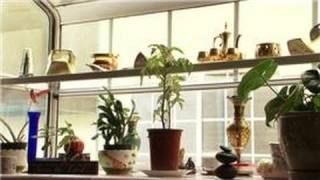 Indoor Gardening Tips : How to Care for Primroses & House Plants