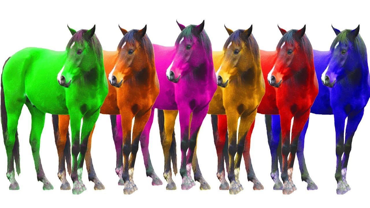 Colorful Domestic Animals With Colours Horses For Children Learn Colorful Horses Colours For Kids Youtube