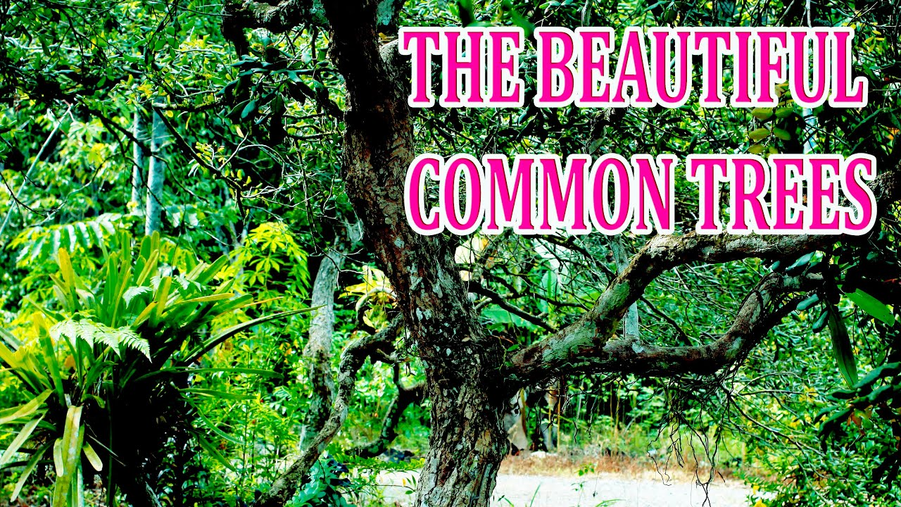 Download COMMON TREES
