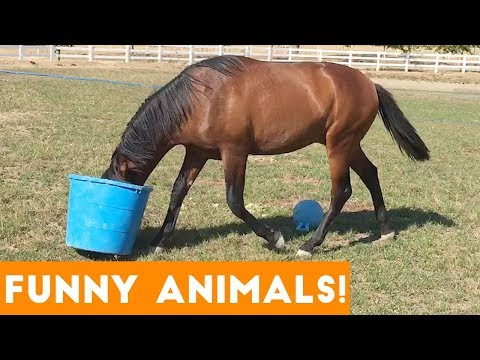 Funniest Pets & Animals of the Week   Funny Pet Videos