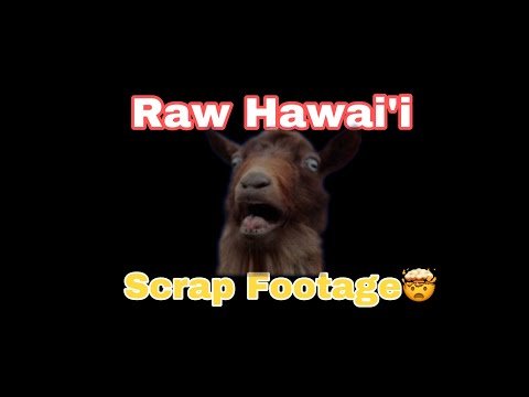 Hawaii SCRAPS Pahala Bangaz