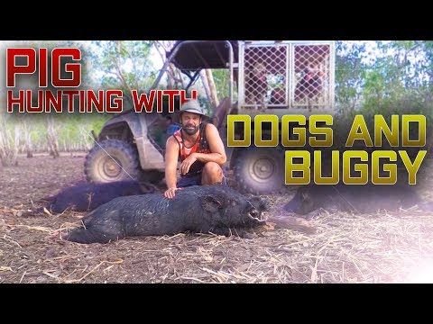 Pig Hunting With Dogs And Buggy Northern Territory Australia, Mobs , Boars, Tonner,