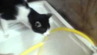 A Hora do Gato Beber Agua