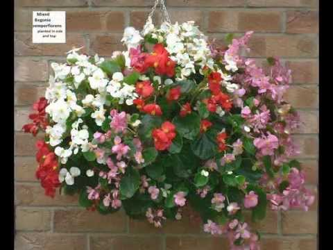 How to make a mixed summer hanging basket advanced doovi - Summer hanging basket ideas ...