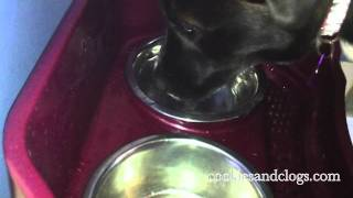 Cat / Dog Neater Feeder Food And Water Bowls In Action