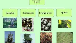 Презентация Жизненные формы растений