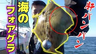 肝が最高に美味しすぎる高級魚を狙う!!