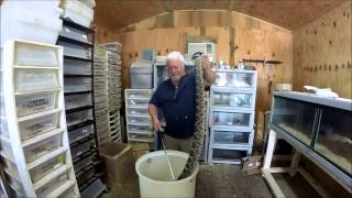 Moving an Eastern Diamondback Rattlesnake