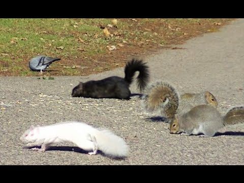 Entertainment Video For Cats and Dogs To Watch - Squirrel and Bird Fun For Your Cat and Dog