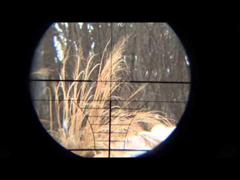 scope cam 1 1
