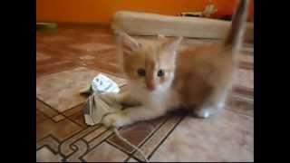 Отдам котенка (мальчик)