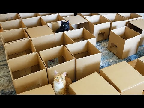 Thumbnail: AMEOW-ZING 50 Box Cat Maze!