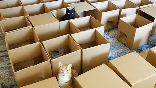 AMEOW-ZING 50 Box Cat Maze! thumbnail
