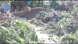 Altre immagini maltempo a Rimini  30 alberi caduti, molti finiti sulle auto in sosta