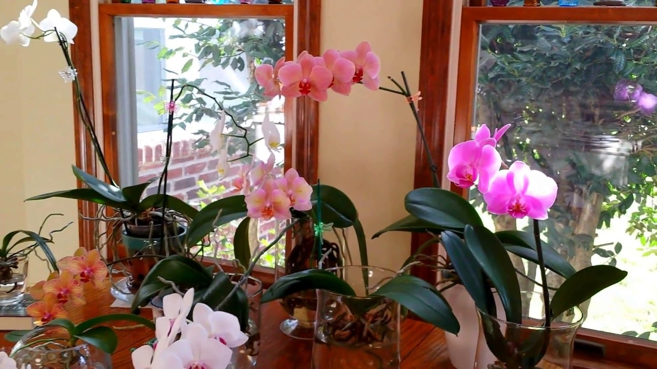 How To Tell If Your Orchids Are Getting Enough Light