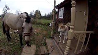 Лошадь помогает собаке открыть дверь.