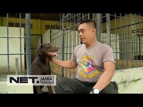 Aksi Berani Para Pawang Anjing Pelacak Polrestabes Semarang - PROFESI SEKITAR KITA