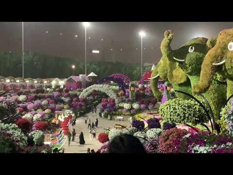 "[video] My Visit To ""dubai Garden!"" Night Lights"