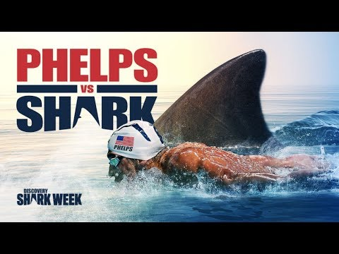 Michael Phelps vs. Great White Shark!!! This race Will Shock You! Фелпс против Акулы!