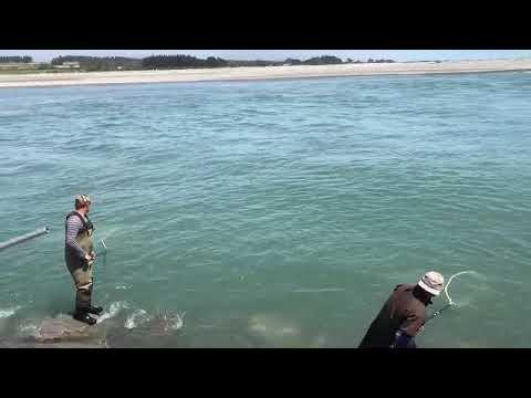 White baiting on the Hokitika River