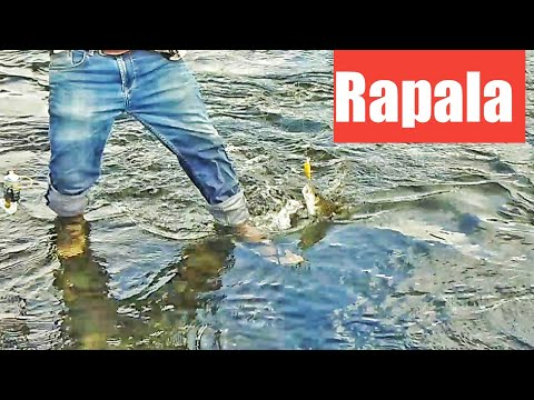 Mahseer Fishing With Rapala Lures || River Fishing || Mahseer Tackle's