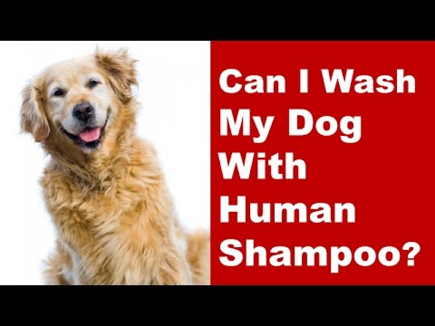 Can i use shampoo to wash dog