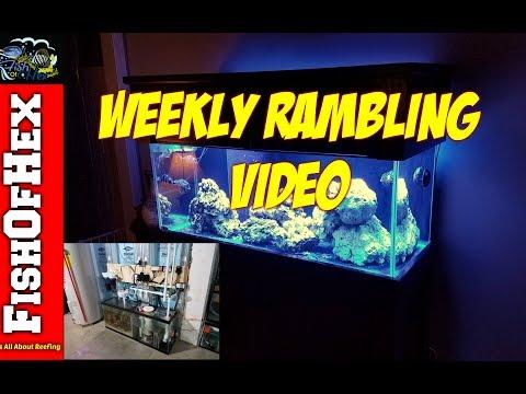 Weekly Rambling Video | Sold My Eel | Broken Sump | New Client Build