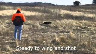 Bull Valley Retrievers - Steady To Wing & Shot / Upland Gun Dog Training