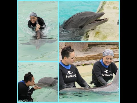 Swimming with the dolphins at Sea World San Diego
