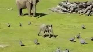 Приколы слонов