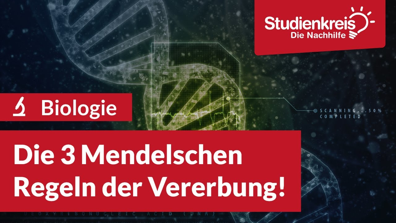 Die 20 Mendelschen Regeln der Vererbung   Studienkreis.de