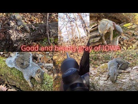 Squirrels Hunting, Tua Nas Nyob IOWA Lub 10/26/2020