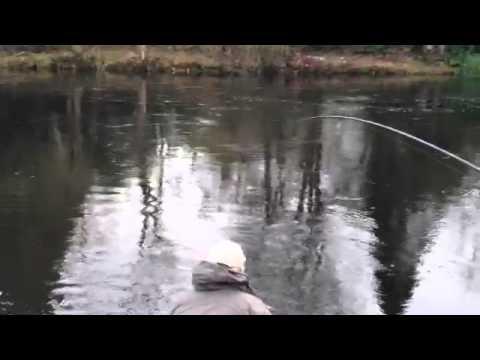 25 Lb Spring Salmon River Teith