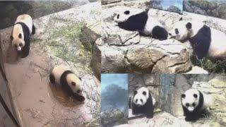 2021-04-25 Xiao Qi Ji ~ Slip Slidin' Away From Mei!
