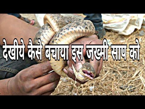 Sarp Mitra Prashant Magar