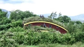 Something Amazing Is Growing On Our Green Roof!