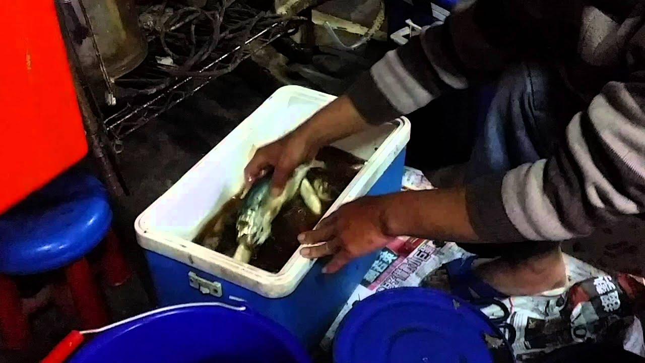 竹筴魚ㄧ夜干製作分享 - YouTube