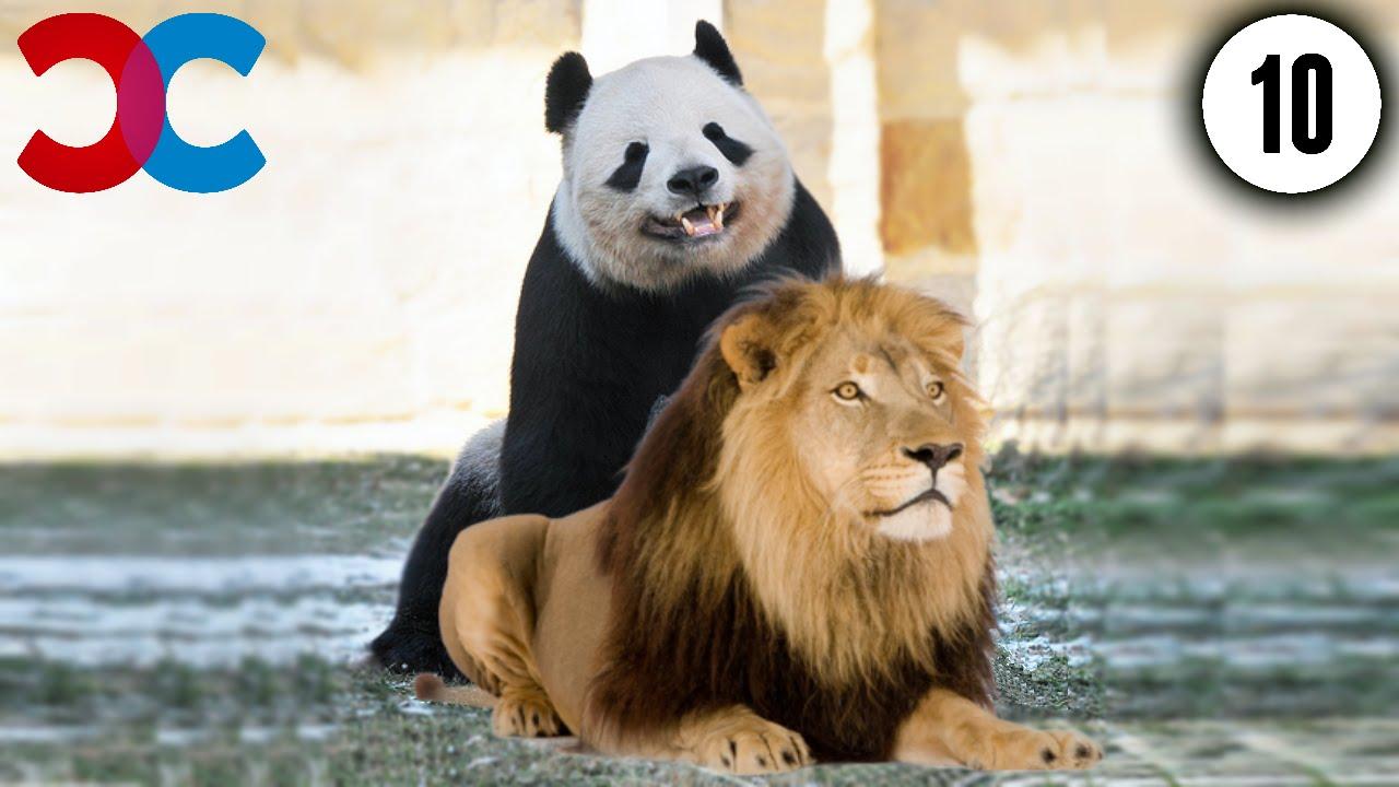 10 ANIMALS MATING RITUALS
