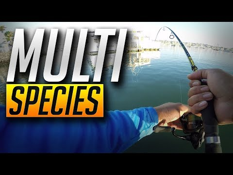 Major Craft JigPara Catches Everything! -- Epic Dock Fishing In San Diego Bay