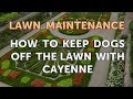 How to Keep Dogs Off the Lawn With Cayenne