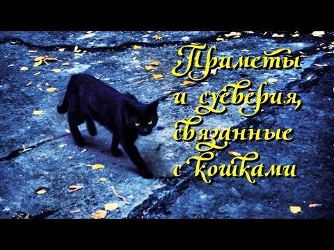 О 10 самых нелепых суевериях, связанных с кошками