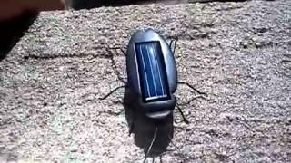Новые Солнечные Таракан (черный)